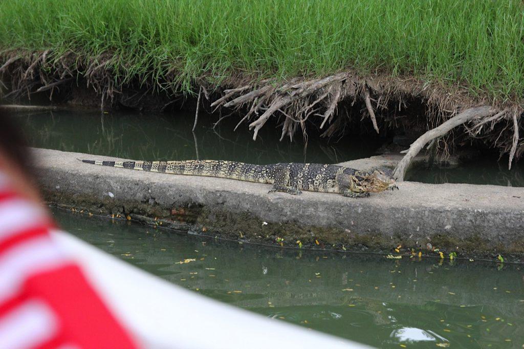 Lumphini Park Bangkok monitor lizard