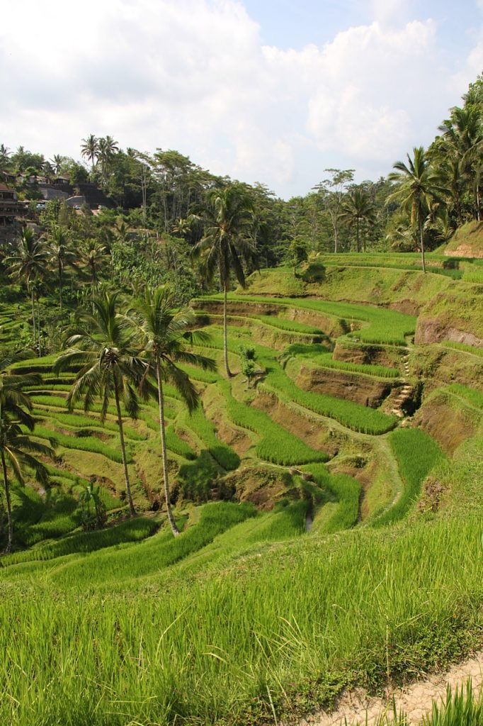 Things to do in Bali, Indonesia: Tegalalang rice terraces