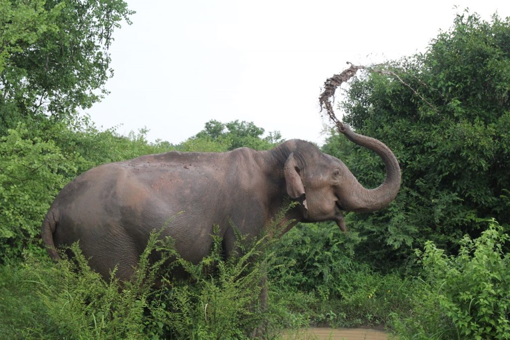 Sri Lanka | Chasing a Plate