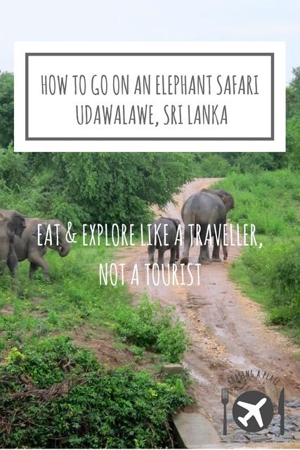 How to go on an elephant safari in Udawalawe, Sri Lanka