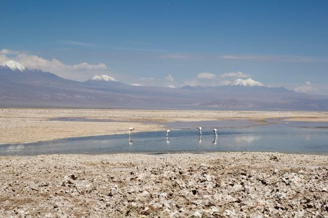 Laguna Chaxa, Atacama Desert