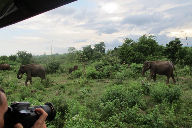 elephant safari at udawalawe national park sri lanka. Black Bedroom Furniture Sets. Home Design Ideas
