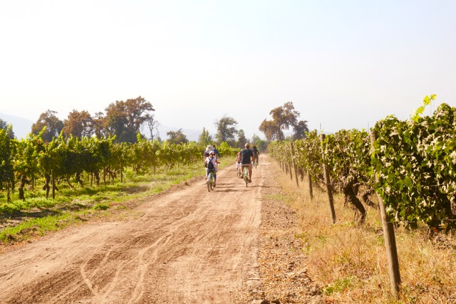 Things to do in Santiago: Biking through the vines at Cousiño Macul,Santiago